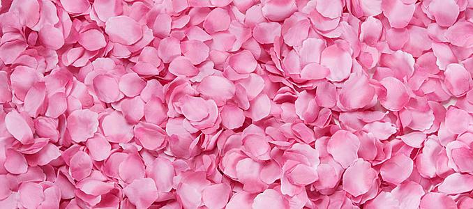 粉色花瓣特写