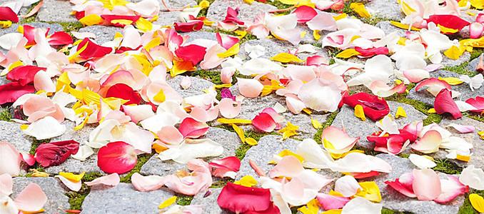 散落一地的鲜花花瓣