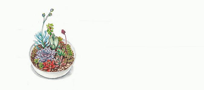 日系文艺清新手绘多肉植物背景