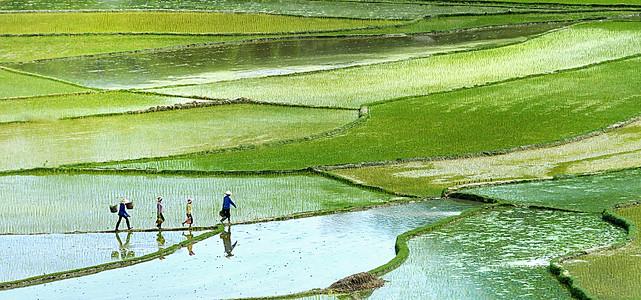 稻田里的人背景装饰
