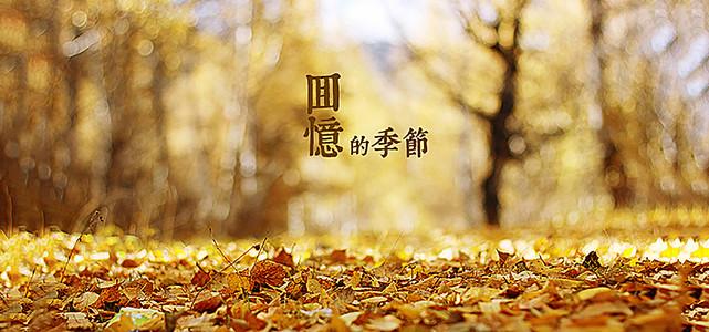 树叶飘落的季节