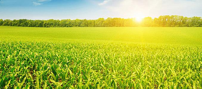 田园风景背景
