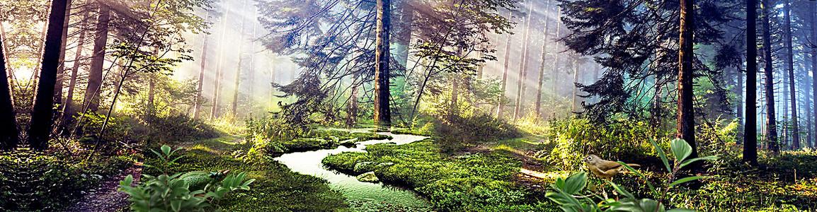 化妆品森林背景