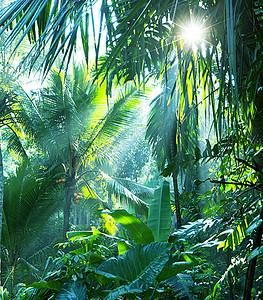 热带雨林阳光背景