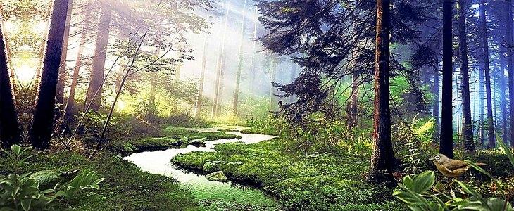 绿色森林海报背景
