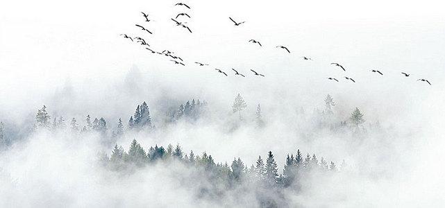 极简北欧宜家风格飞鸟松树林云雾电视背景墙