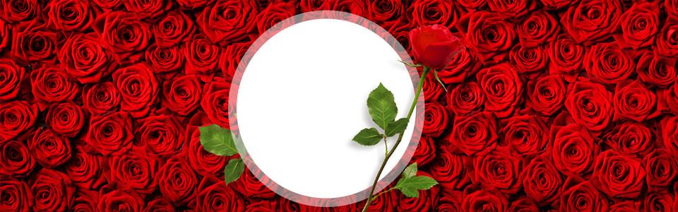 红玫瑰花海banner海报展板