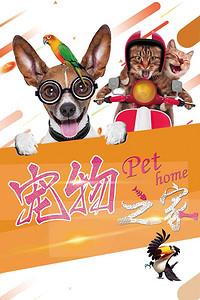 宠物之家宠物店猫狗卡通海报