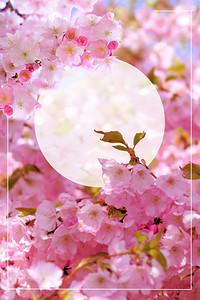 粉色浪漫樱花节海报