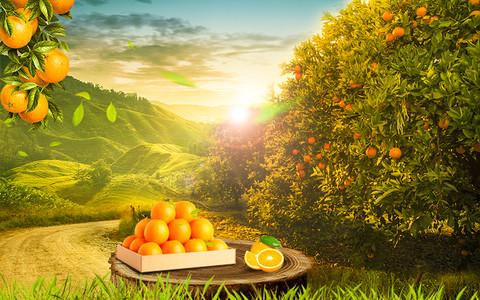 自然橘子合成海报野外场景