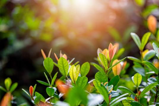 摄影图·春天的希望