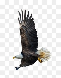 黑老鹰图案