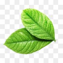 绿叶植物PNG