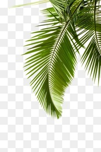 绿叶 植物 PNG