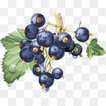 矢量图蓝莓