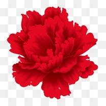 春节红色牡丹花朵野牡丹