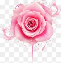 水墨背景粉色玫瑰花