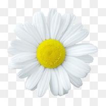 背景元素花朵海报背景白色花朵