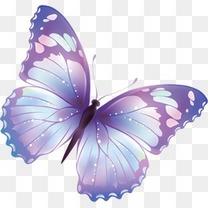 绚烂的蝴蝶