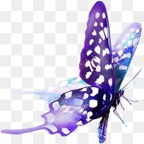 自然动物 紫色唯美蝴蝶