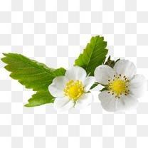 绿植花卉抽象花朵图清新白色小花
