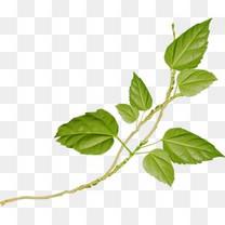 树叶背景素材卡通树叶植物叶子绿藤春天环保