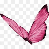 粉色 蝴蝶 梦幻 装饰