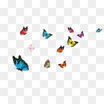 飞舞的蝴蝶
