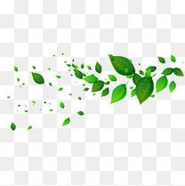 绿色漂浮树叶