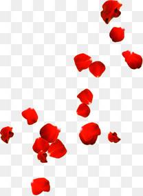飘散玫瑰花瓣七夕情人节
