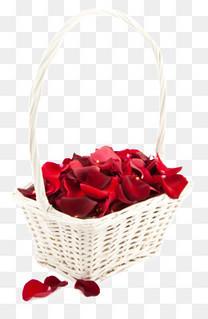 蓝子玫瑰花瓣