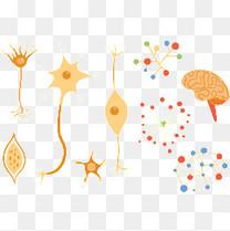 多种神经组织素材