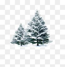 雪地里的松树组合