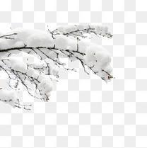 雪中白色树枝