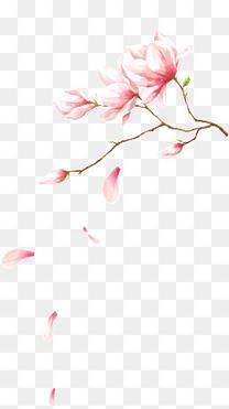 花枝上飘落着花瓣