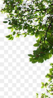 绿色树枝树叶实物素材
