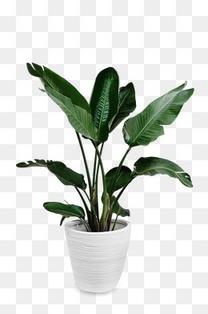 白色花盆绿色盆栽