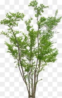 树 树木 木