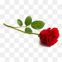 情人节高清玫瑰花浪漫装饰