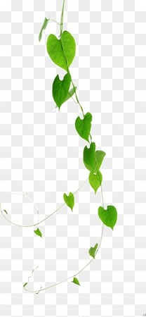 绿色植物藤蔓垂下叶子