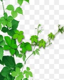 绿叶枝叶边角装饰