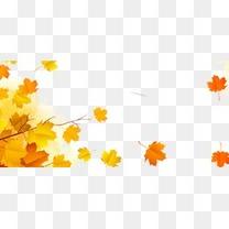 秋天飘落的黄色枫叶
