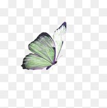 古风绿色蝴蝶