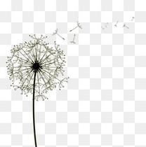 蒲公英漂浮花瓣气泡简洁大方树叶树丛