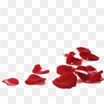 红色飘落凋零玫瑰花瓣装饰