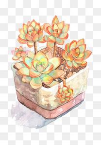 一盆多肉植物