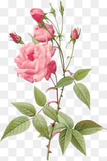 复古手绘花
