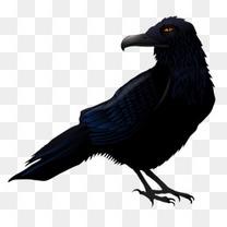 万圣节素材乌鸦