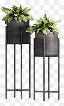 植物高花盆盆栽