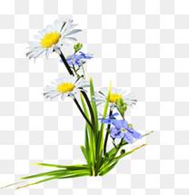 白色野花野草
